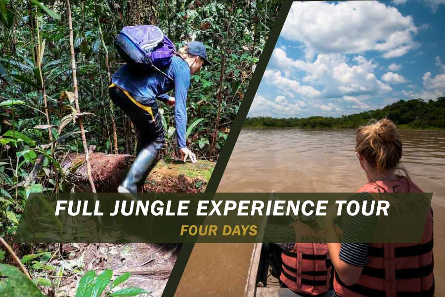 full-jungle-experience-four-days