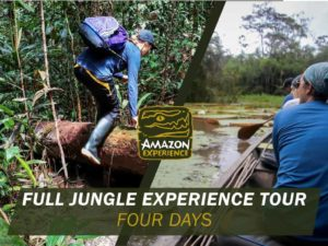 full jungle experience tour